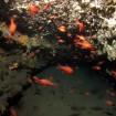 Plongée à Aleria